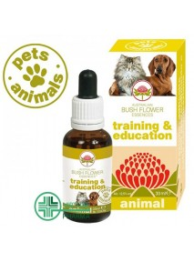 Pets Animals Training e...
