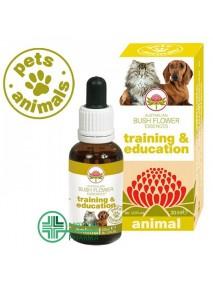 Pets Animals Training e...