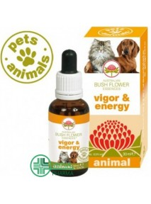 Pets Animals Vigor & Energy...